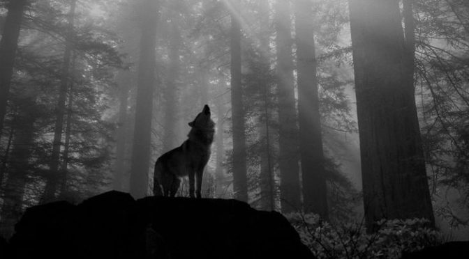 229634_lone-wolf-wallpapers-backgrounds-with-quality-hd_1999x1333_h